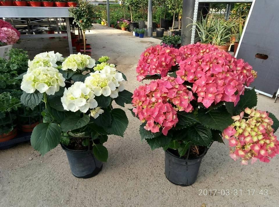 piante colorate