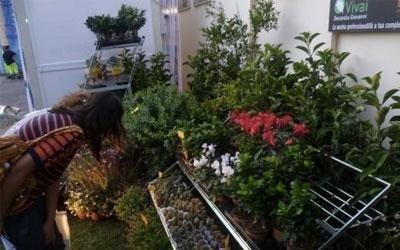 Esposizione piante