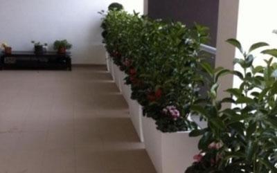 Allestimenti piante