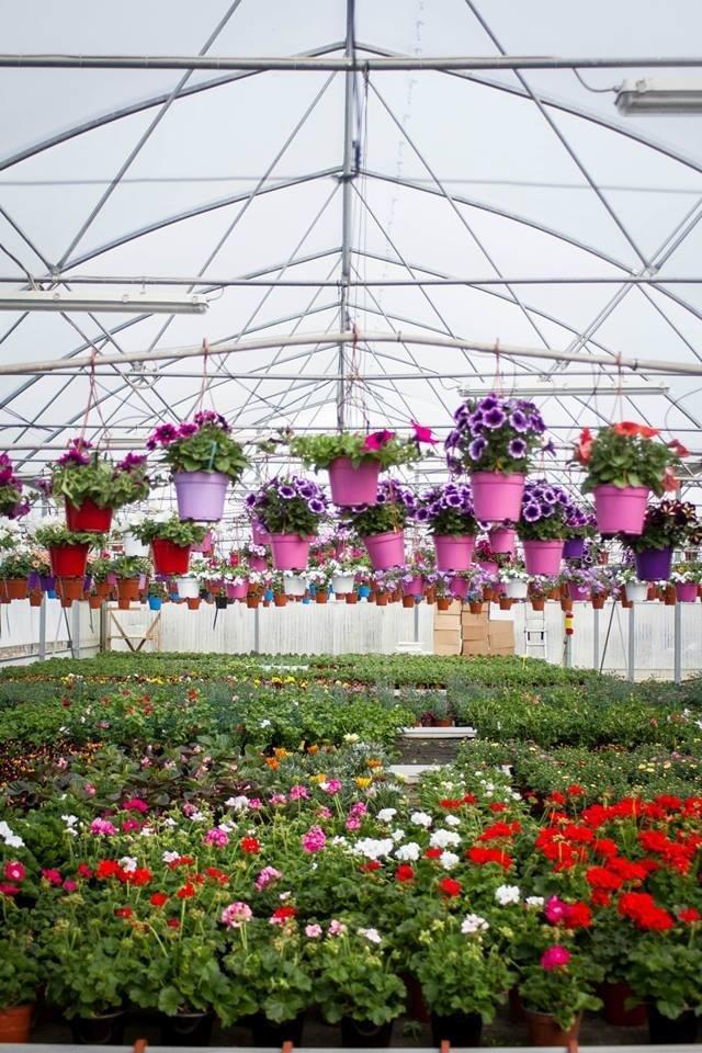 serra con fiori