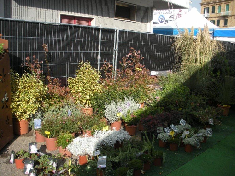 giardino con piante