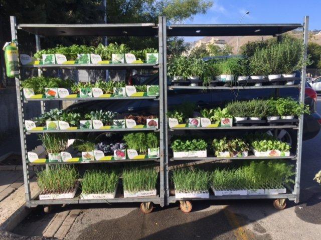 scaffali con piante
