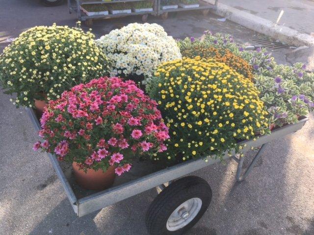 fiori in vaso su traporto