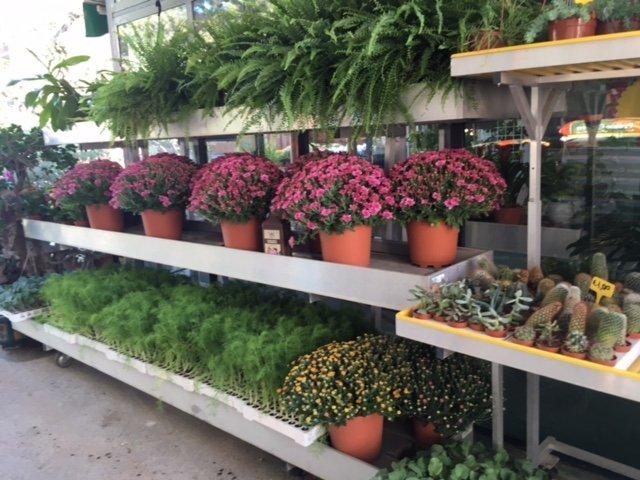 piante e vasi misti su scaffali