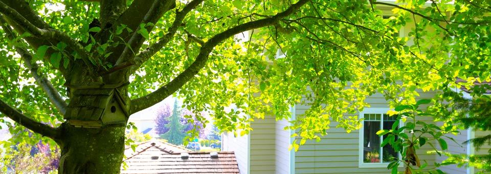 Tree disputes between neighbours spiritdancerdesigns Image collections