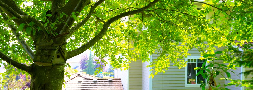 Tree disputes between neighbours spiritdancerdesigns Gallery