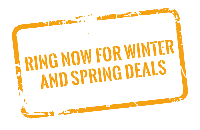 Winter and spring deals banner