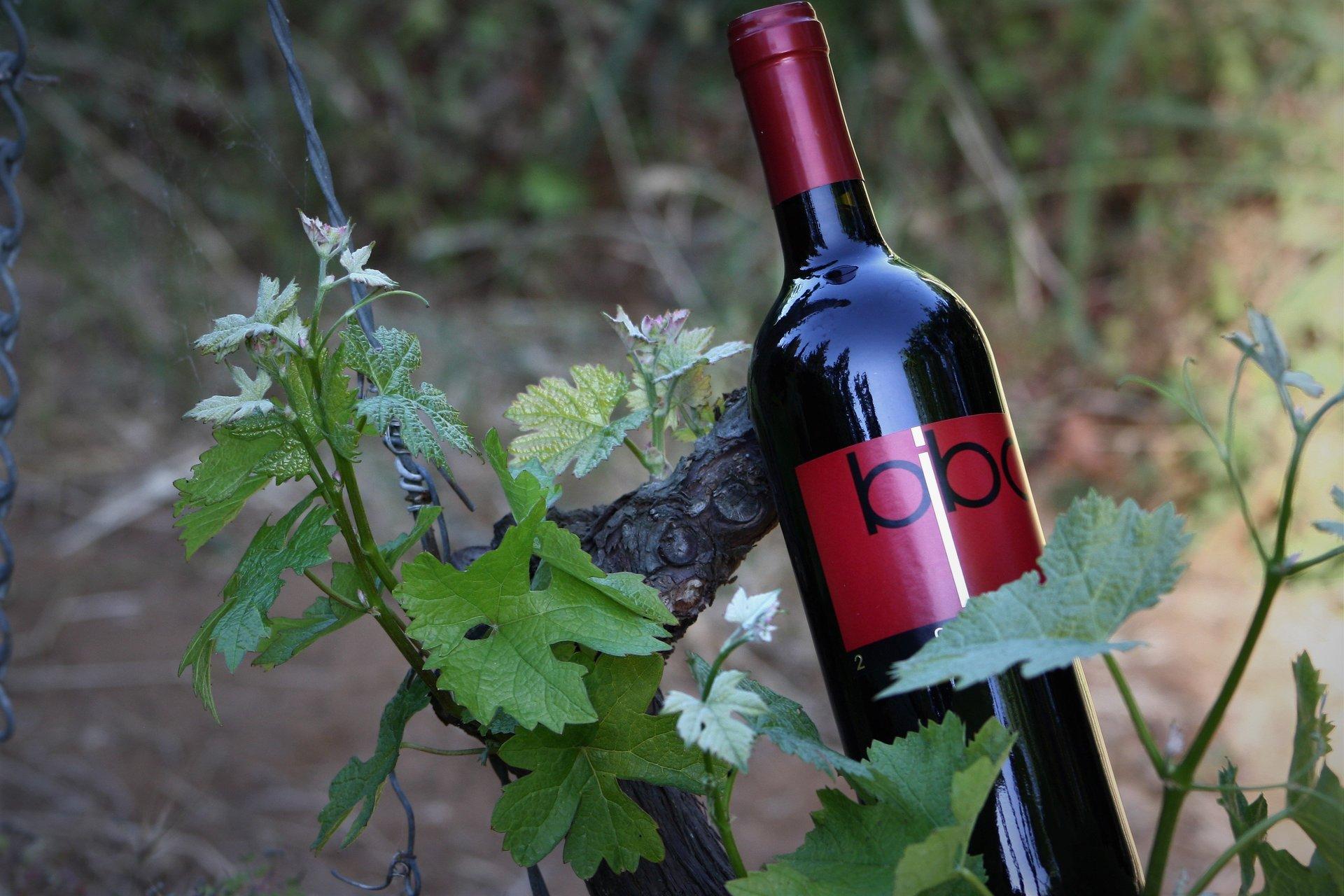 Bottiglia  di vino tra i vigneti