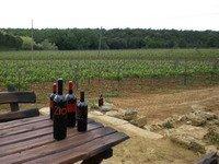 tavolino in legno con bottiglie di vino vicino a un campo di vigneti