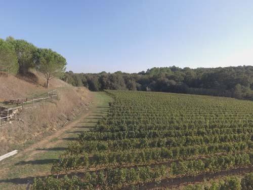 campo azienda agricola