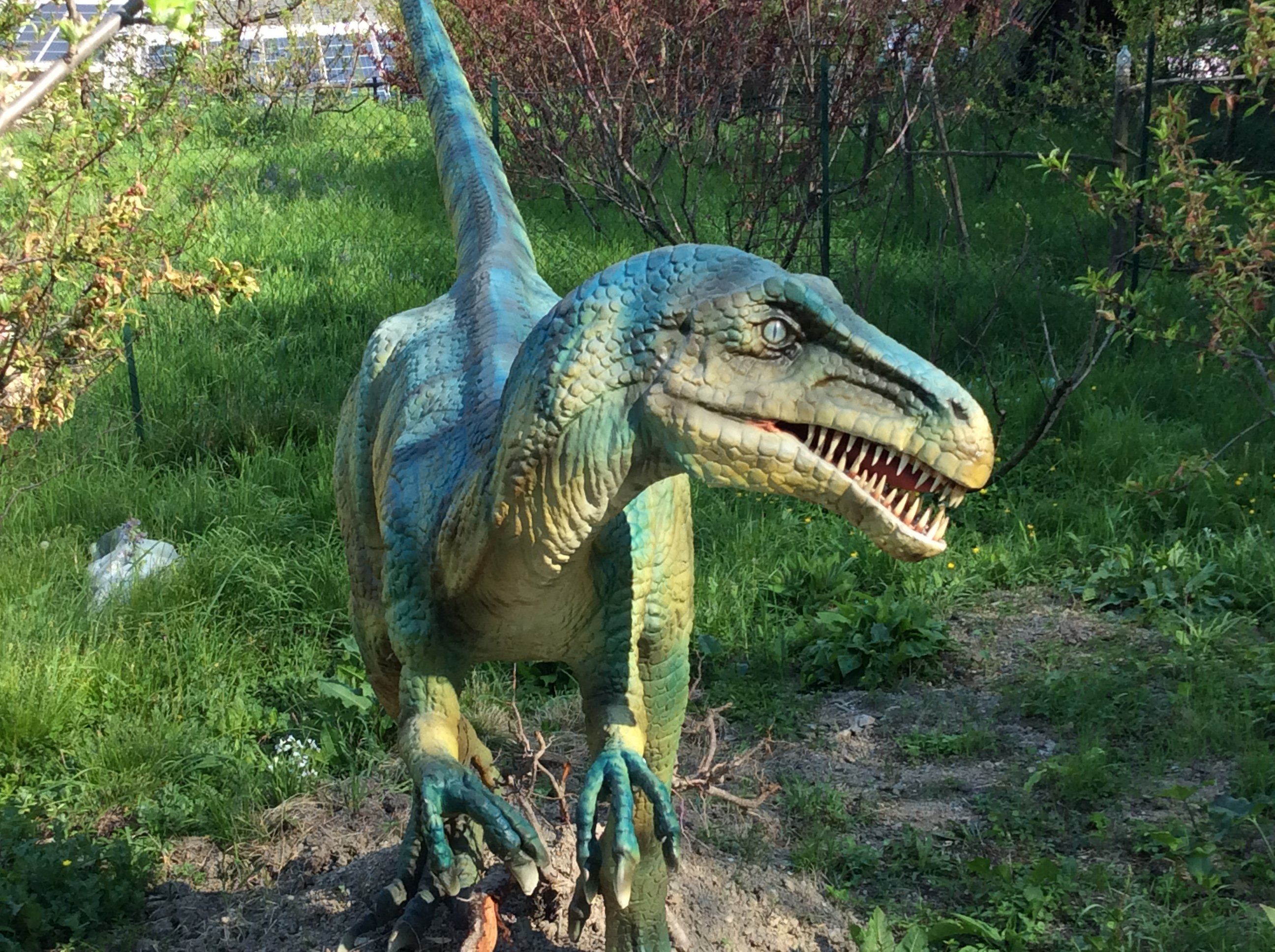Modello di un Velociraptor blu