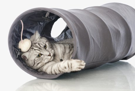 Affordable Cattery