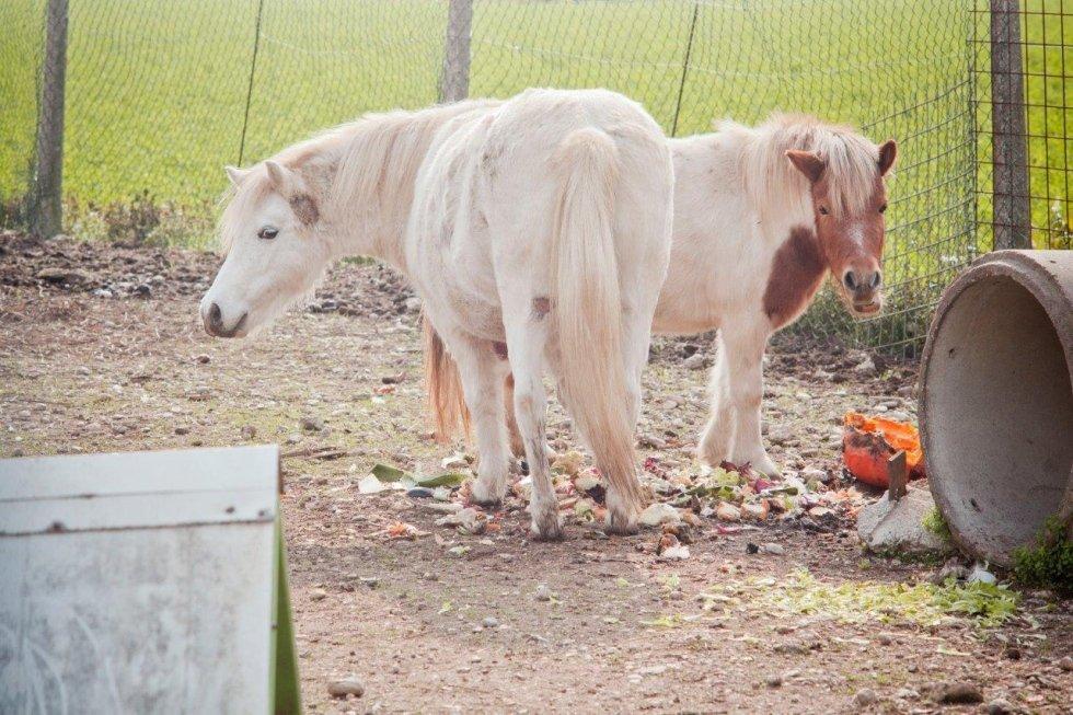 cavallini in fattoria