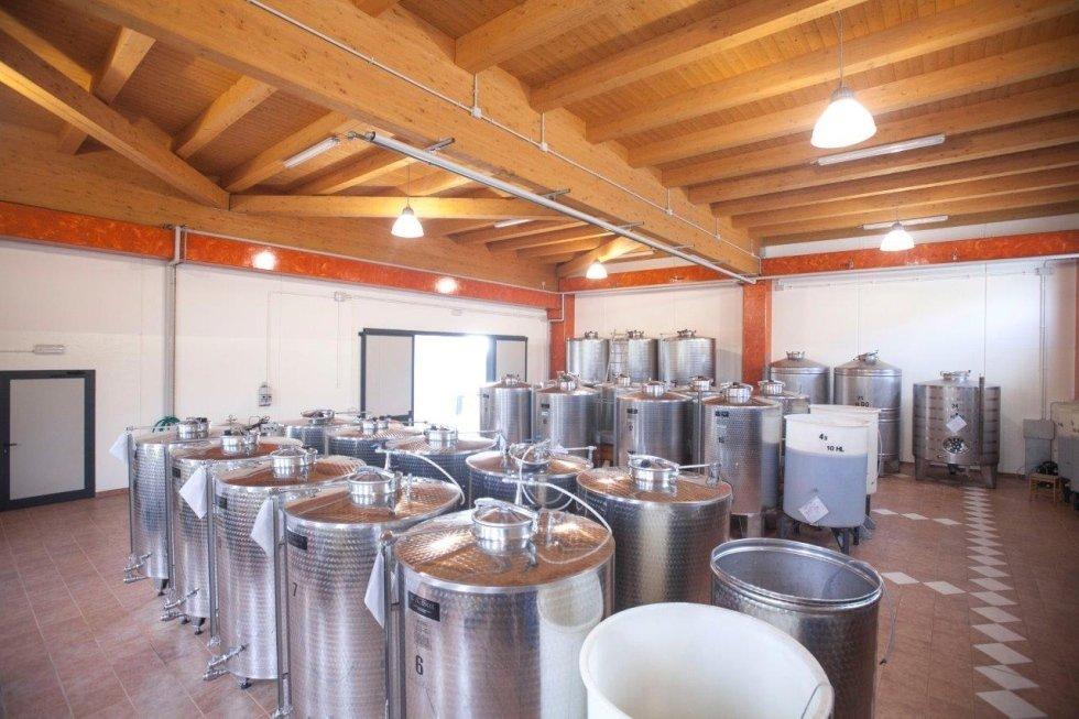 Vinicoltura friulana