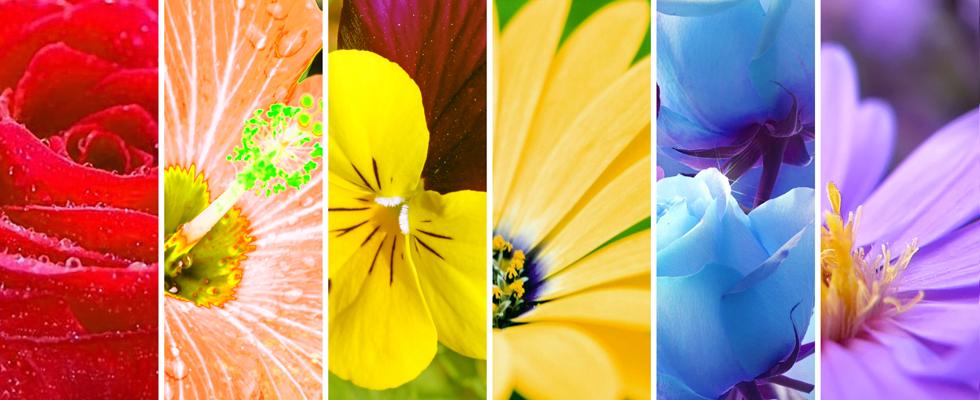 i fiori di jonne