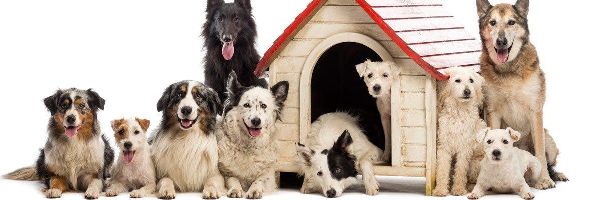 railton boarding kennels cattery dog kennel