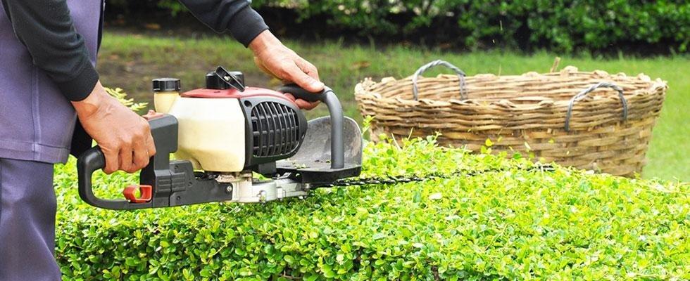 manutenzione giardini appignano