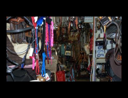 Cinghie e briglie per cavallo