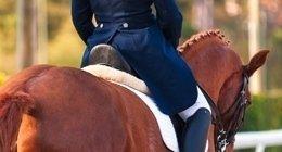 prodotti accessori equitazione