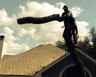 Tree Removal San Marcos & Austin, TX