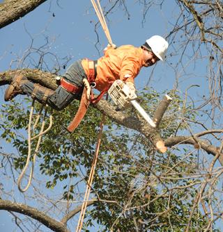 Tree Trimming Austin, TX