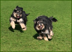 Picture of two dogs running