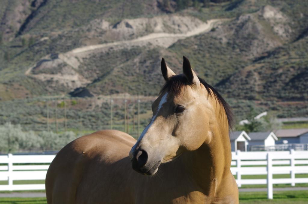 Horse - Bronze