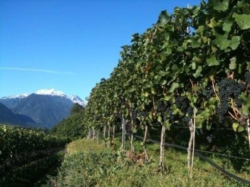 Köfelgut - Alto Adige