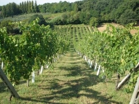 Vino Castelvecchio - Carmignano