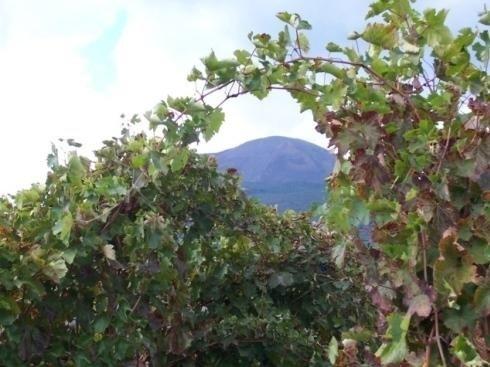 Vini Sorrentino Vesuvio