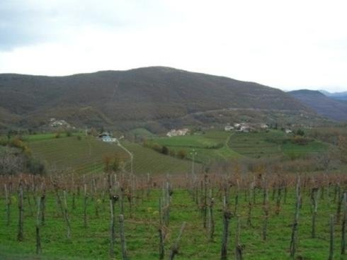 Vini Draga-Collio