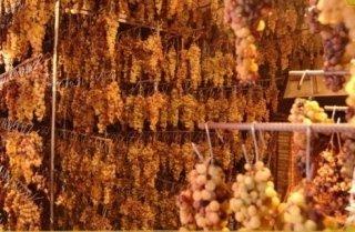 Vini del Montefeltro