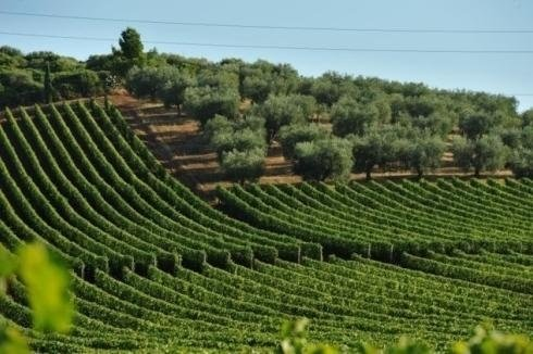 Monteverro Maremma Toscana