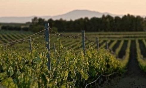 Vino Tondini Calangianus