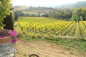Az. Ag. Montecalvi - Greve in Chianti