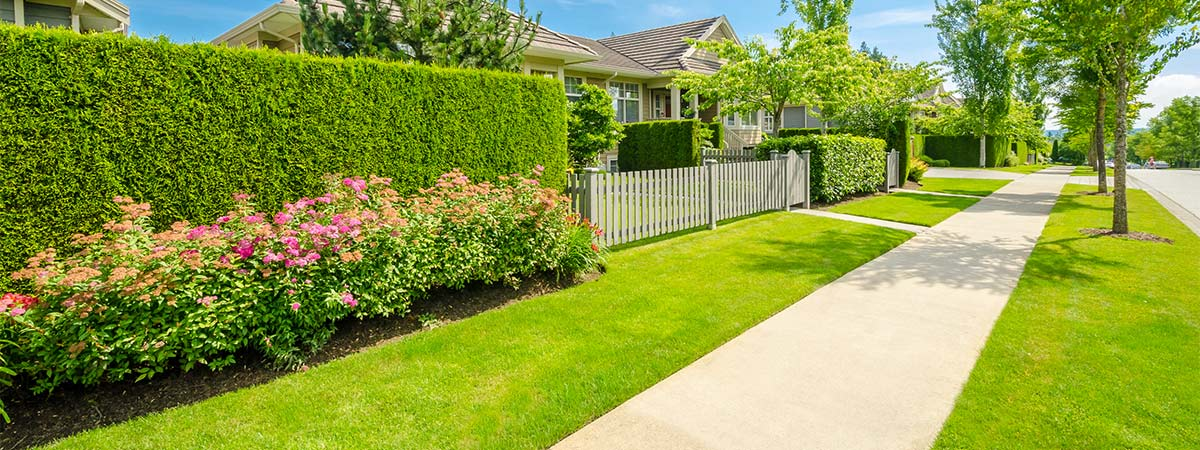 Lawn garden care in warners bay nsw australia the for Local garden maintenance