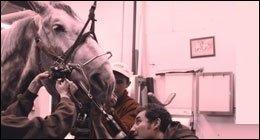 veterinario equini