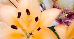 fiori e piante, vendita fiori freschi, allestimenti floreali funebri