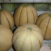 vendita Frutta fresca