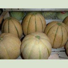 Meloni all
