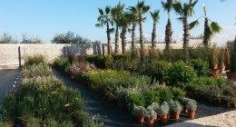 palme, rosmarino, piante da terrazzo, piante