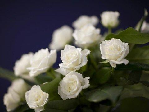 Piante e fiori consegna a domicilio