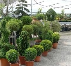 vasto assortimento piante da fiore