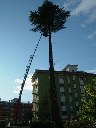 taglio alberi ad alto fusto