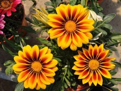 noleggio piante e fiori per eventi