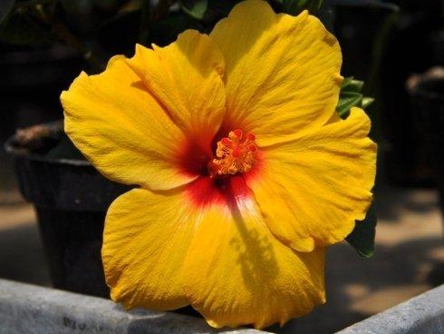 piante e fiori da regalo