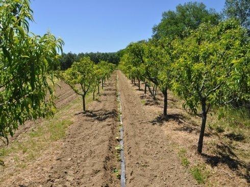 manutenzione alberi da frutto