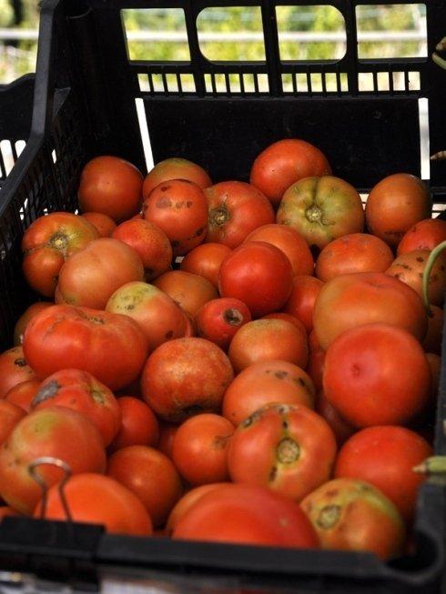 vendita pomodori biologici