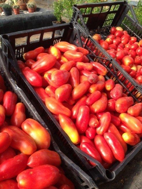 vendita pomodori boccette