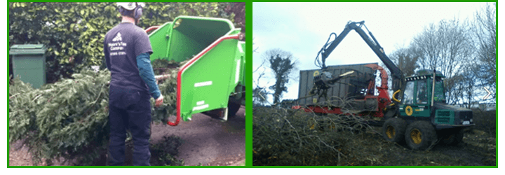 Tree-Work---Surrey---Moore's-Tree-Company---cutting